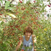 Лилия 54 Усть-Каменогорск