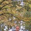 Михаил, 41, г.Славяносербск
