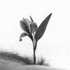 MOON FLOWER, 43, г.Лагос