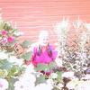 АНТОНИНА, 61, г.Вологда