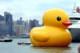 Творение художника Флорентина Хофмана, легендарный желтый утенок, доплыл до Пекина.