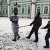 Рене, 38, г.Санкт-Петербург