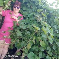 Тамара, 52 года, Рак, Сальск