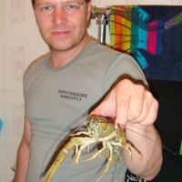 серёжич, 36 лет, Скорпион, Москва