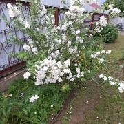 Иван 58 Москва