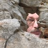 Валерий  Ершов, 58, г.Нацэрэт