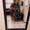 Людмила, 52, г.Жуковский