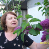 Зоя, 72, г.Анапа