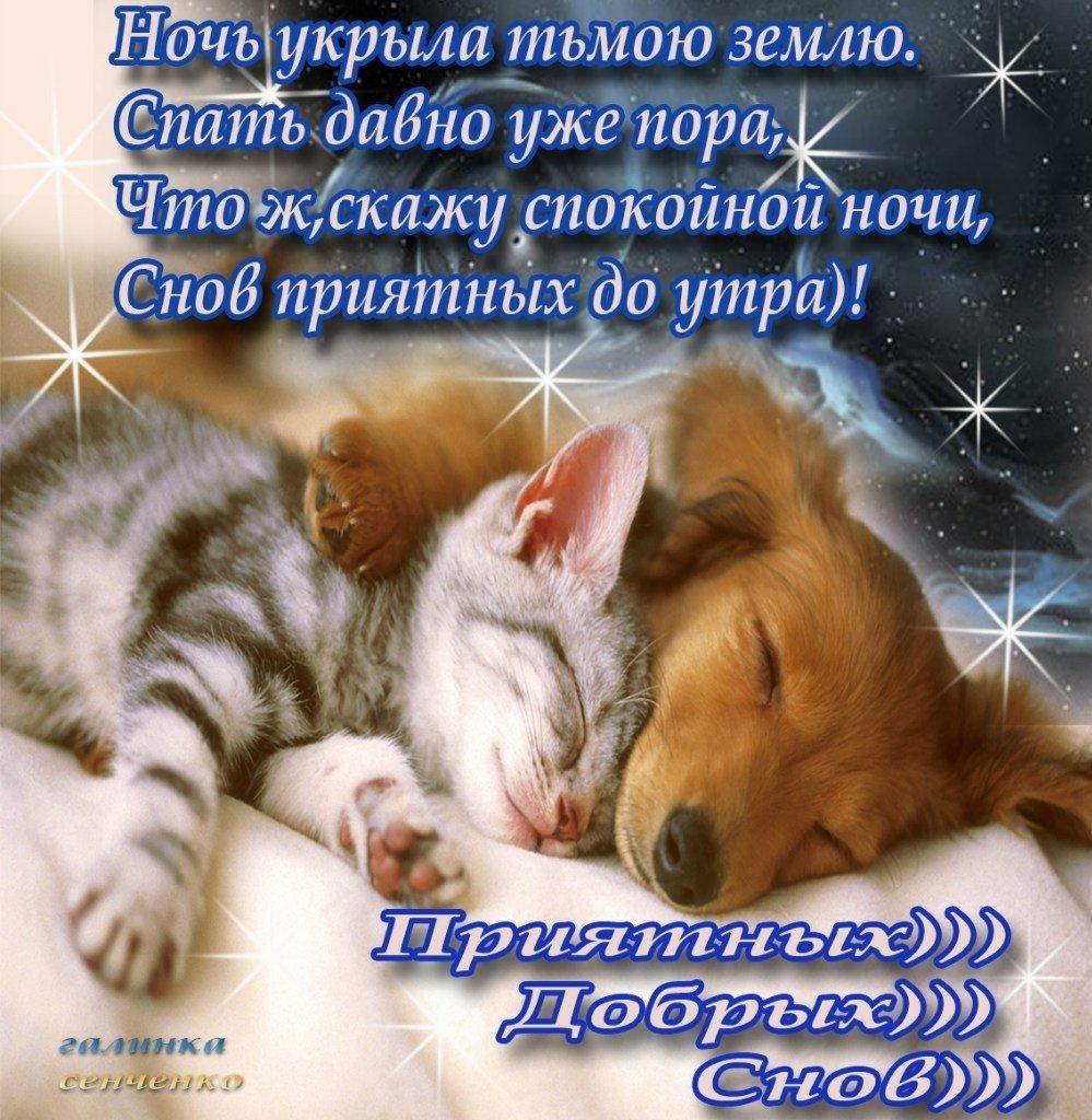 чиновников различных сладких снов любимая стихи фото продаже оригинальные