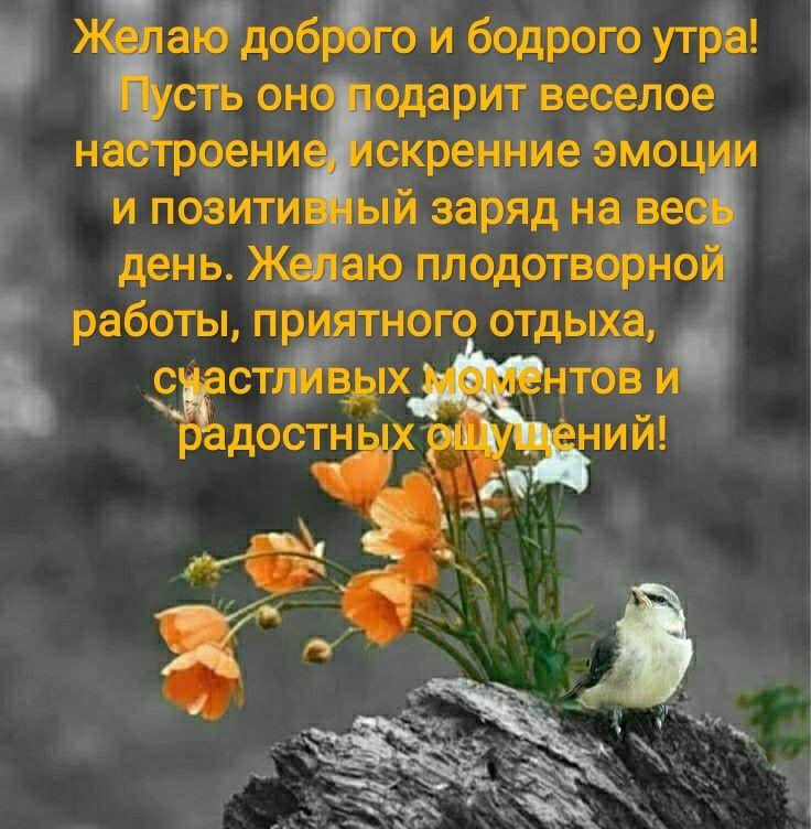 мудрое пожелание доброго утра частенько достается