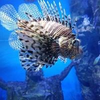 Tanya, 40 лет, Рыбы, Эспоо