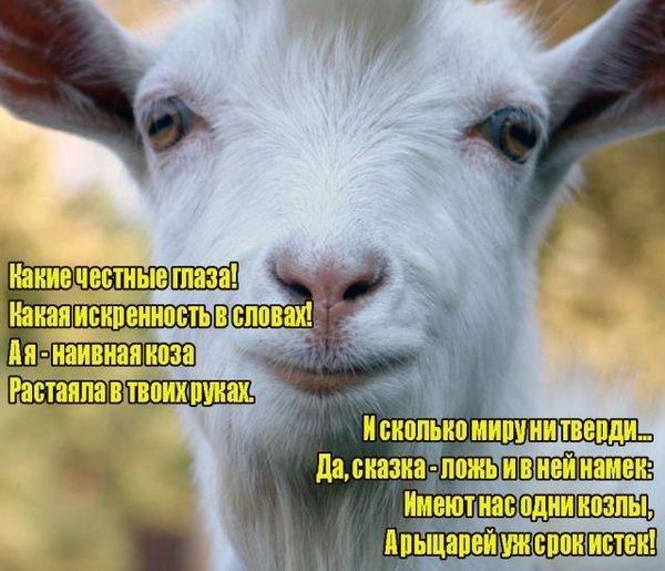 заготовкой смешные открытки про мужиков козлов ярких