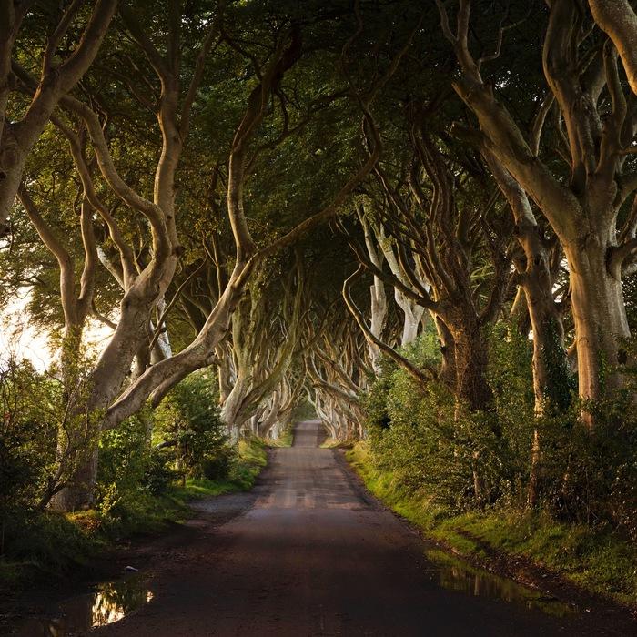 фото таинственный лес северная ирландия фильтр-пакеты