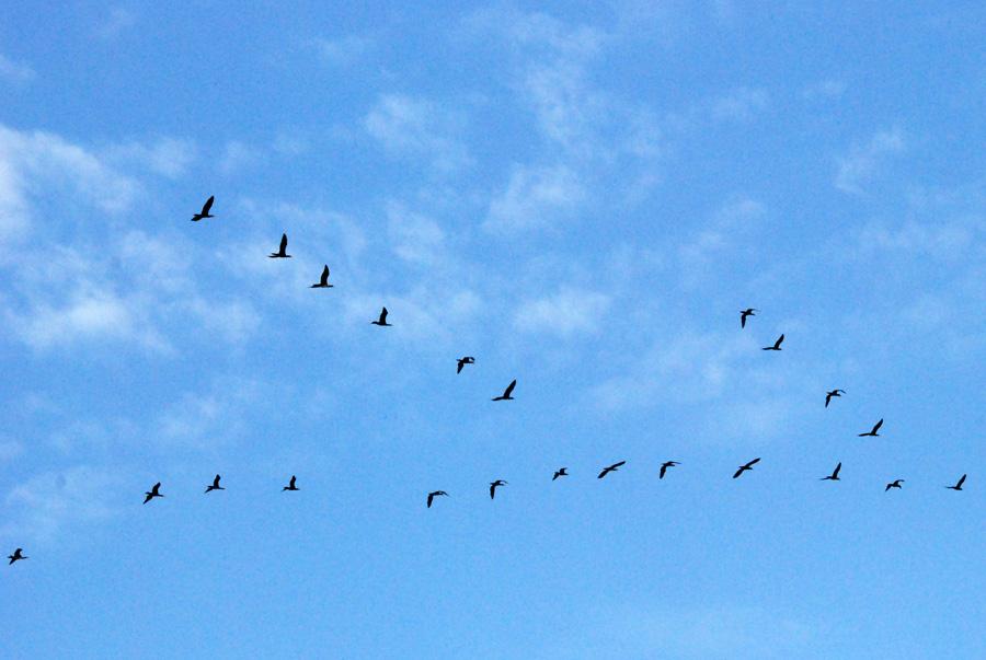нашем птицы летят косяком картинка вариант форсирование днепра