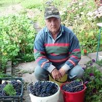 Ан, 65 лет, Лев, Витебск